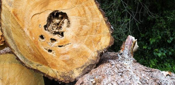 tree-worx-facebook-cover